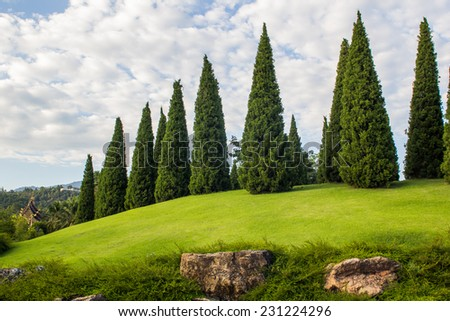 Pine tree garden with decoration cutting  - stock photo