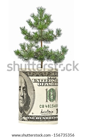 Pine tree  growing from dollar bill - stock photo