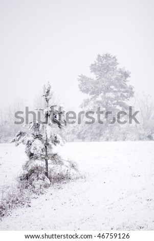 Pine tree in snow after Mississippi Blizzard - stock photo