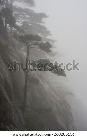 Pine tree in the fog on a misty morning in the Huangshan (Yellow Mountains), Anhui Province, China - stock photo