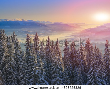 pine tree in winter at sunset in the mountains. Purple sky - stock photo