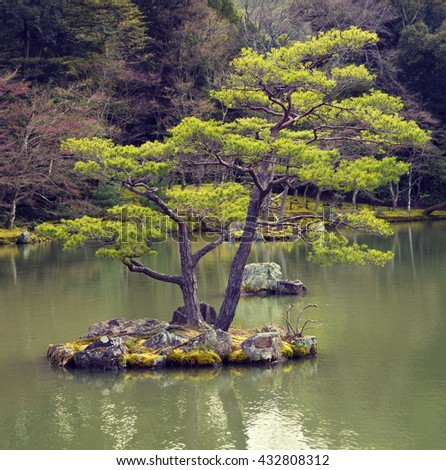 Pine tree on small rock island in Japanese garden in Kyoto, Japan