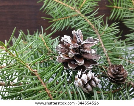 pine tree on table