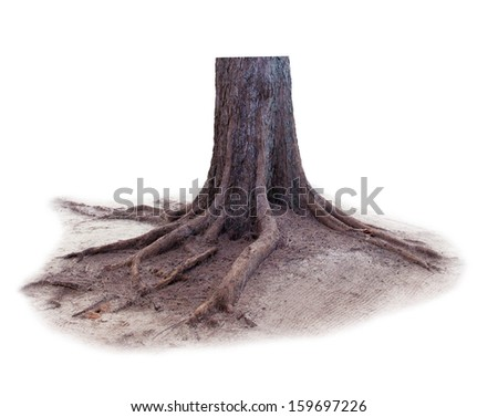 pine tree stump isolated white background - stock photo