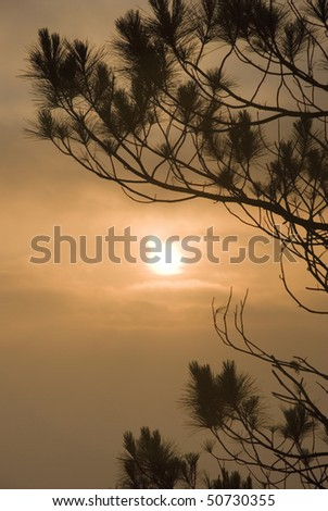 Pine Tree Sunrise Silhouette - stock photo