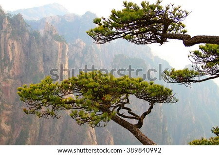 Pine trees and Huangshan mountains, China - stock photo