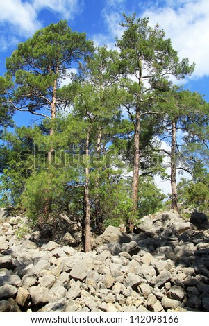 Pine trees and rocks on the Lyciam way in Goynuk canyon, Turkey