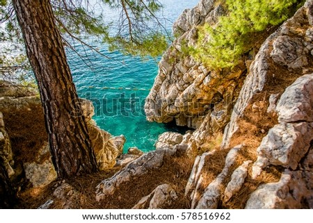 pine trees and rocks on the shore of the Adriatic Sea