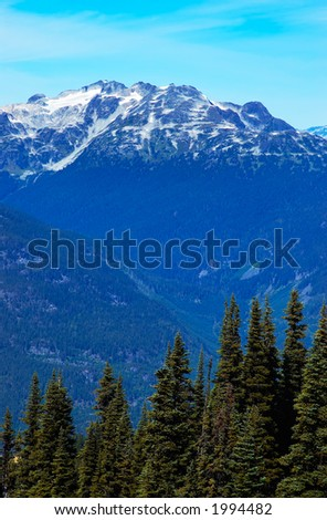 Pine trees and snow peaks of Blackcomb Mountains. More with keyword group14l  - stock photo