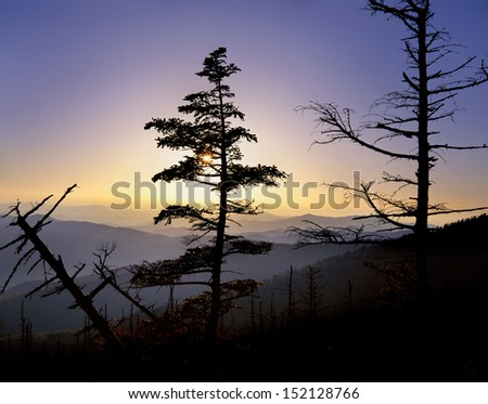 Pine Trees Atop Clingman's Dome At Sunset In The Great Smoky Mountains National Park, Tennessee, North Carolina, USA - stock photo