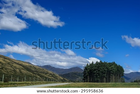 Pine trees beside the road on a background of hills. South Island, New Zealand - stock photo