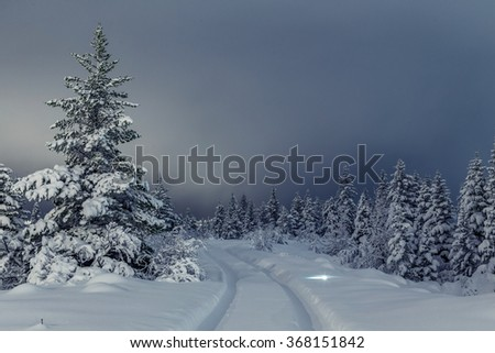 Pine trees covered in snow after heavy snowing, tire tracks in the snow into the forest
