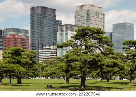 pine trees growing in park in Tokyo center, Japan - stock photo