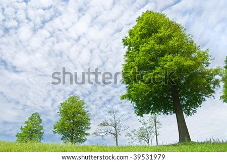 Pine trees in spring field, spring meadow with cloudy sky.
