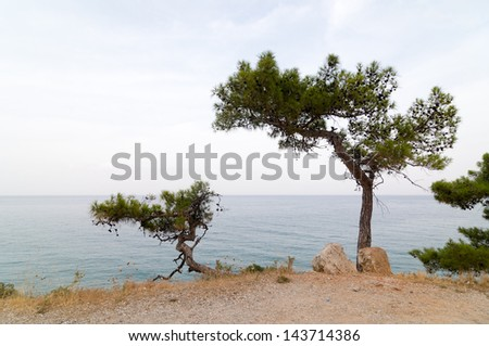 Pine trees on a sea shore in Turkey