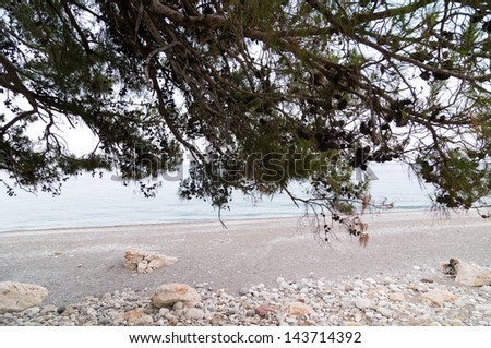 Pine trees on a sea shore in Turkey - stock photo