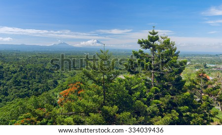 Pine trees on background of the Balinese landscape - stock photo