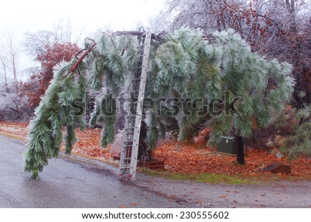 Pine trees under heavy ice  - stock photo