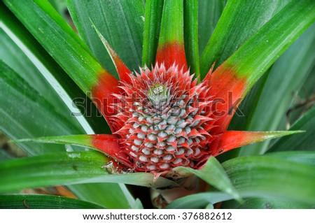 Pineapple flower - stock photo