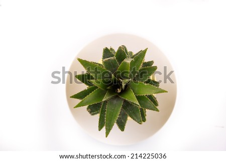 Pineapple on a plate - stock photo