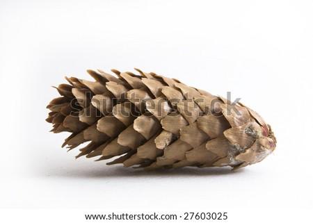 Pinecone isolated on white - stock photo
