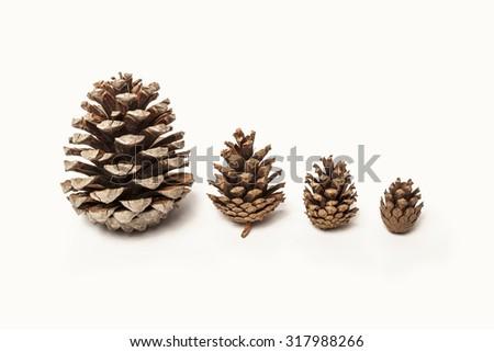 Pinecones isolated - stock photo