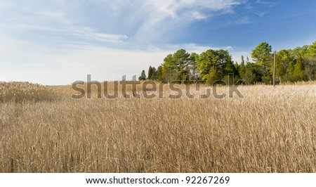 Pinelands of New Jersey Landscape - stock photo