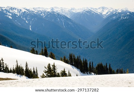 Pines and Mountain Valley at Olympic National Park - stock photo