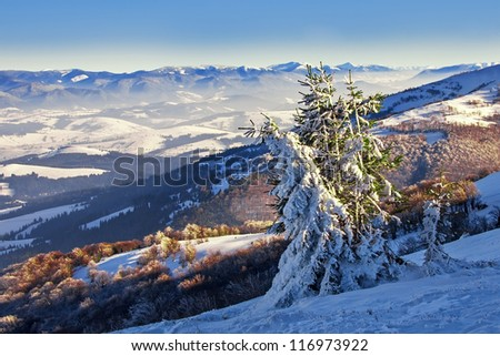Pines covered with on a mountain hill, winter landscape