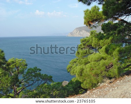 Pines on the rocky shore