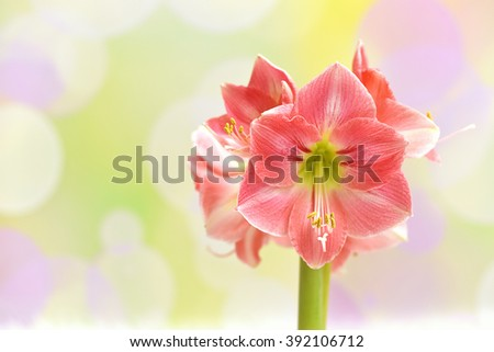 Pink amaryllis on a colorful spring background