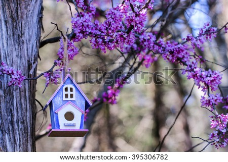 Pink and purple birdhouse hanging from tree with spring blossoms - stock photo