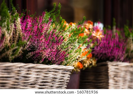 Pink and purple heather in decorative flower pot - stock photo
