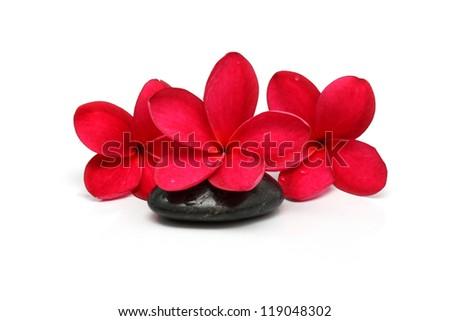 Pink and red Frangipani Plumeria flower - stock photo