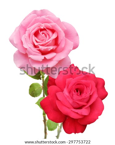 Pink and red rose bunch isolated on white background - stock photo