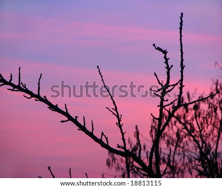 Pink and violet sunset - stock photo