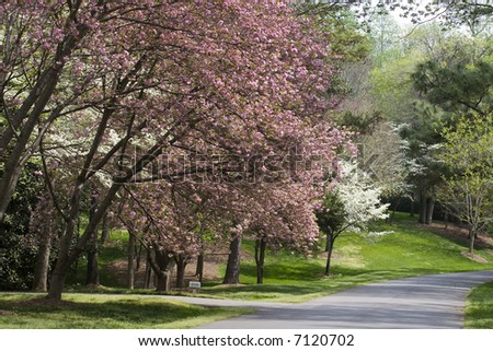 Pink and White Spring Tree Blooms - stock photo