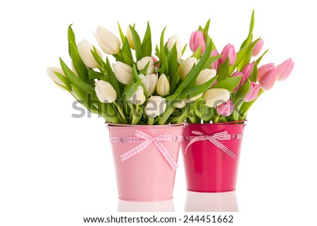 Pink and white tulips in buckets isolated over white background - stock photo
