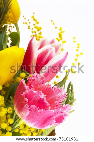 Pink and yellow tulips, mimosas on a white background