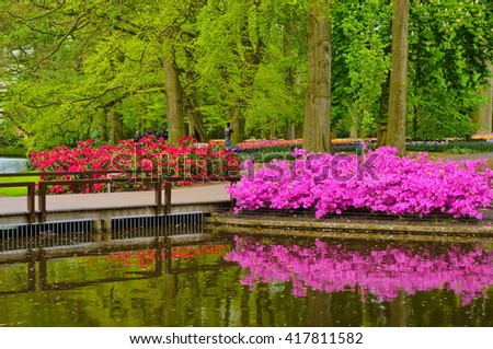 Pink azalea flowers near the pond, Keukenhof Park, Lisse in Holland.