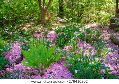 Pink azalea petals and early Spring growth in this woodland in Central New Jersey. - stock photo