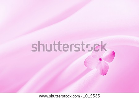 Pink Background With Flower. - stock photo