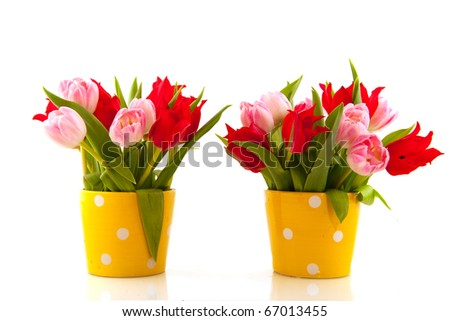 Pink basket with colorful tulips in spring
