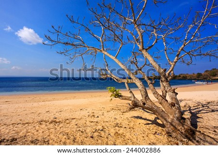 Pink Beach in lombok with blue sky background and Long Exposure Seascape. (soft focus, shallow DOF, slight motion blur)  - stock photo