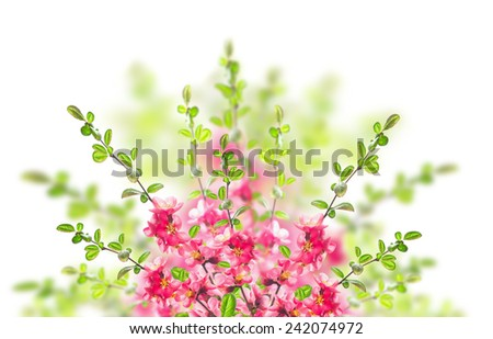 Pink blooming bush on white background - stock photo