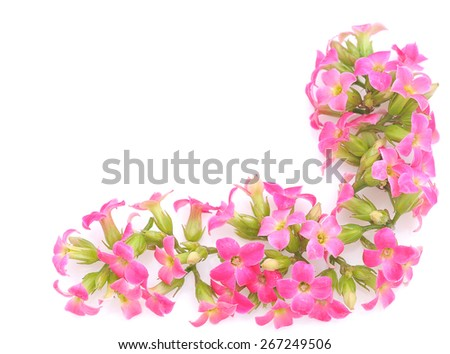Pink blossom border - stock photo