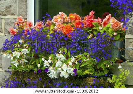 Pink, blue and white trailing flowers in a window box of an old English stone house.  - stock photo