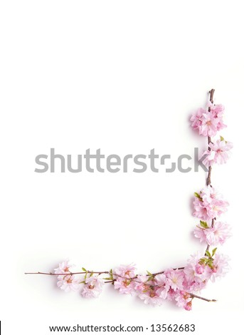 pink branch floral corner, white background - stock photo