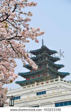 Pink cherry blossom tree with Big castle background ; Gyeongbokgung Palace at South Korea