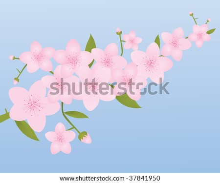 Pink Cherry Blossoms on Spring Blue Background with Room For Text